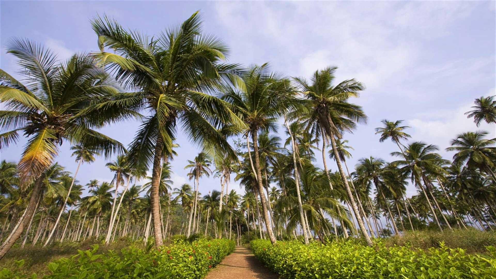 Petit écrin de végétation luxuriante perdu au milieu de l'immensité de l'Océan Atlantique, l'archipel de Sao Tomé-et-Principe est un joyau où tout reste à découvrir